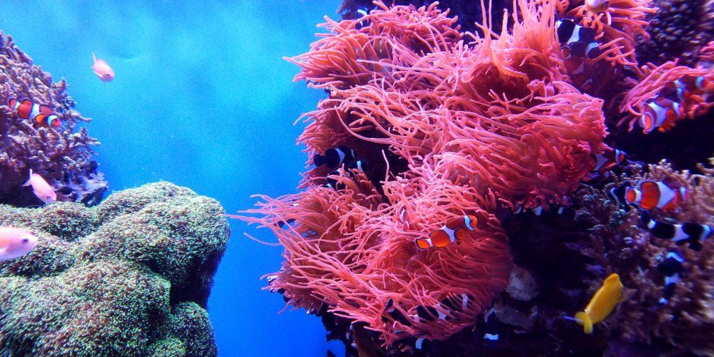 Восстановление коралловых рифов
